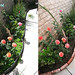 Brick lined garden planter before and after
