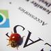 DSC05133-ladybug