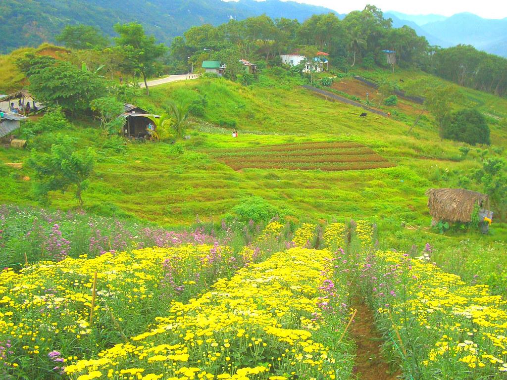 Flower Plantation in Transcentral Highway Cebu Philippin…