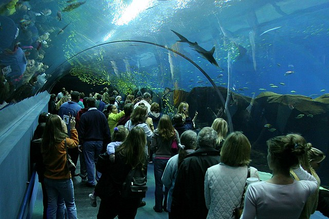 Georgia Aquarium in Downtown Atlanta is known as a major attraction across the region and the world for its expansive fresh and salt water sanikarginet.mlon: Baker St NW, Atlanta, , GA.