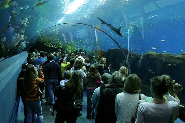 Georgia Aquarium Member 39 S Day Georgia Aquarium Member
