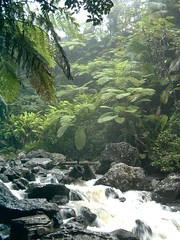 El Yunque Rainforest, Puerto Rico 3 | by crossfirecw
