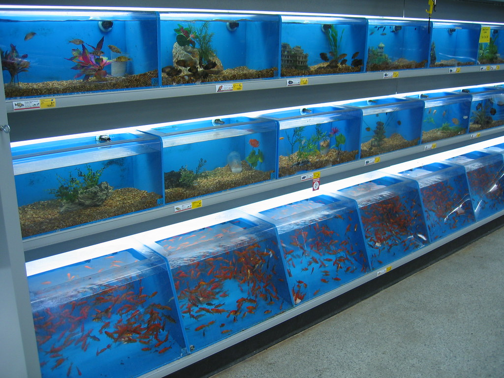 Petsmart fish prison nate steiner flickr for Fish and pet store