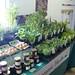 Organic Herbs in Paddy's Market