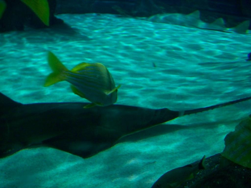Image Result For Ripleys Aquarium Of