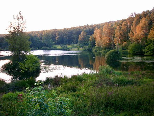 Tranquility hirschborn pond near bad soden salmuenster for Pond companies near me