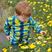 Two and a half year old looking at daisies, Sweetwater NWR, Imperial Beach