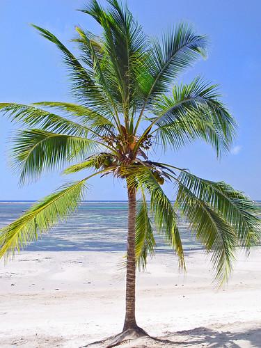 Palm tree and sea | Ni...