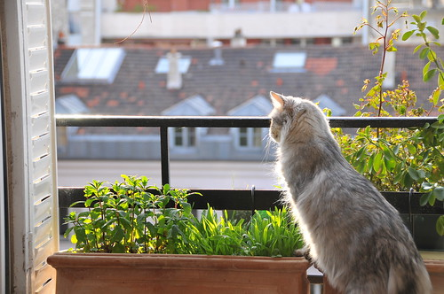 Appartment cat dreaming of greener landscapes | by Stephane Enten