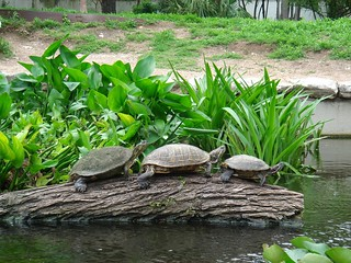 turtles | by Ann Althouse