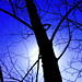 Tree-branch Shaman