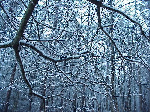 Snow Branches | by glennharper