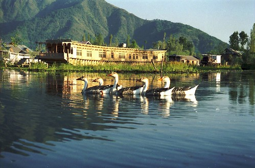 dal lake Dal lake - get latest news on dal lake read breaking news on dal lake updated and published at zee news.