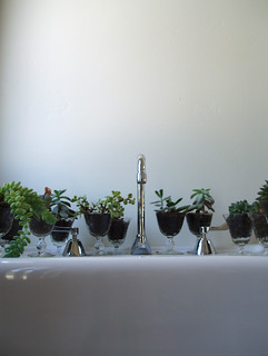 succulent line up | by emdot