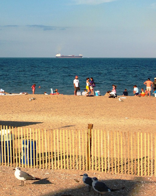 Rehoboth Beach Vacation Rentals Pet Friendly