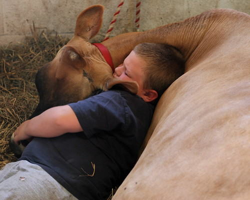 A boy and his cow | by Richard-