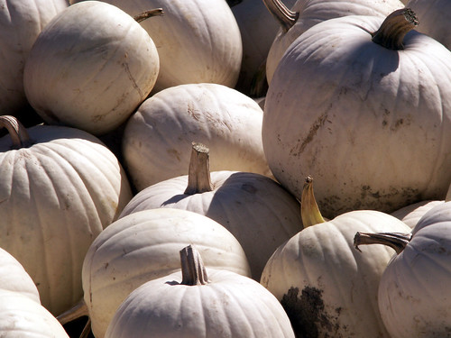 "White ""Ghost"" Pumpkins 
