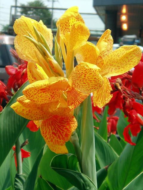 Canna Plant Food Reviews
