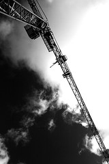 Craning to see the sky | by Donncha Ó Caoimh