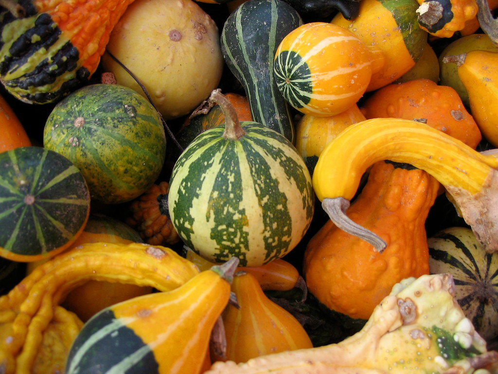even more gourds nauman s pumpkin s galore and more waterl flickr rh flickr com