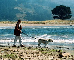 Woman Walking White Dog on Beach | by danagraves