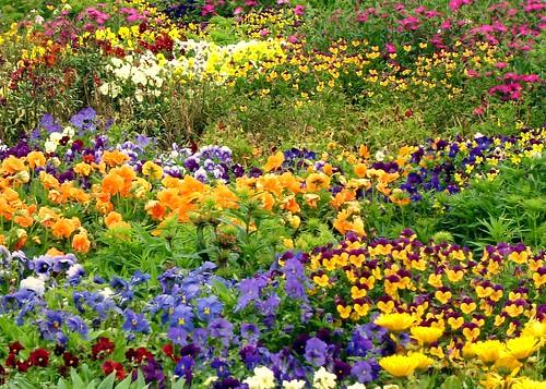 indian garden flowers at hamilton gardens new zealand