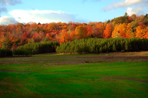 Nature's Contrasting Colours | by azmuskoka