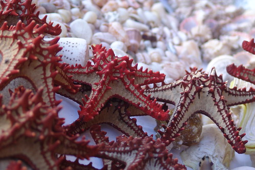 Starfish | by CharlesFred