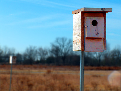 Birdhouses | by jmknapp