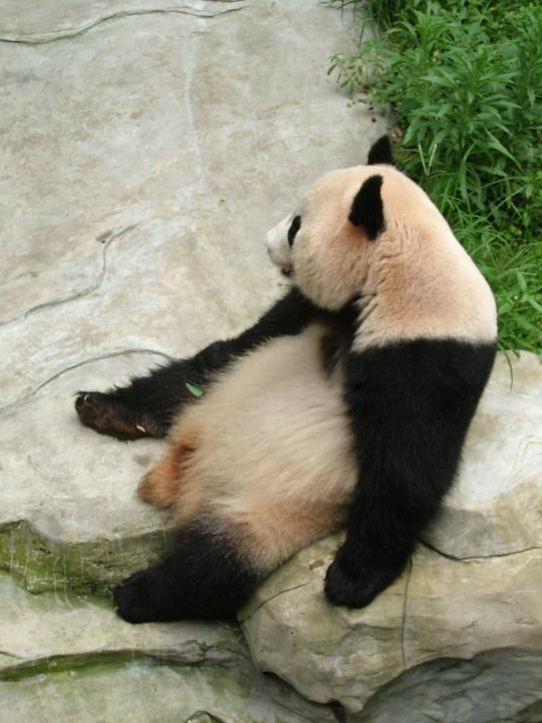 Panda Travel And Tours Greenhills