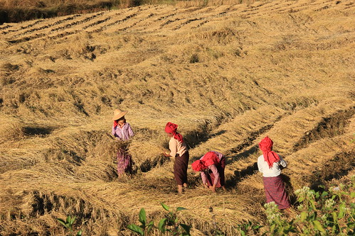 Local women working on the land