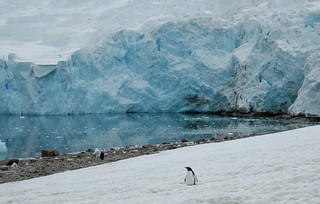 Antarctica - Neko Harbour | by Rita Willaert
