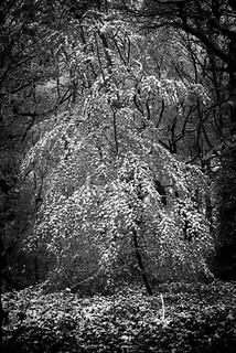 snow-tree | by dannyhow2011
