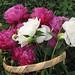 Peonies, Garden Basket2