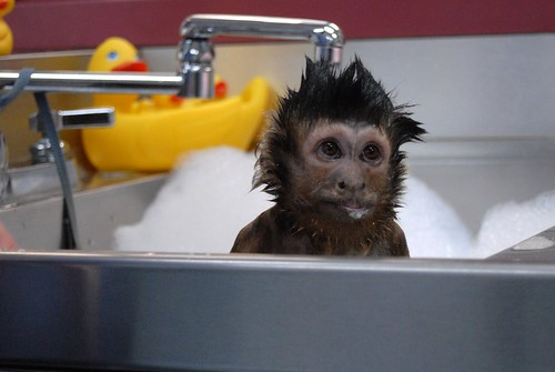 Bathtime. | by Helping Hands: Monkey Helpers
