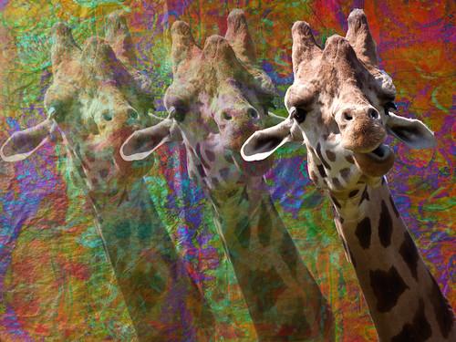 Digital collage with giraffe