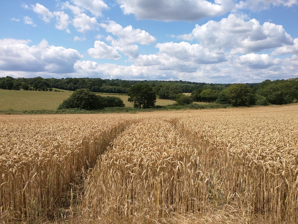 Image result for grain fields