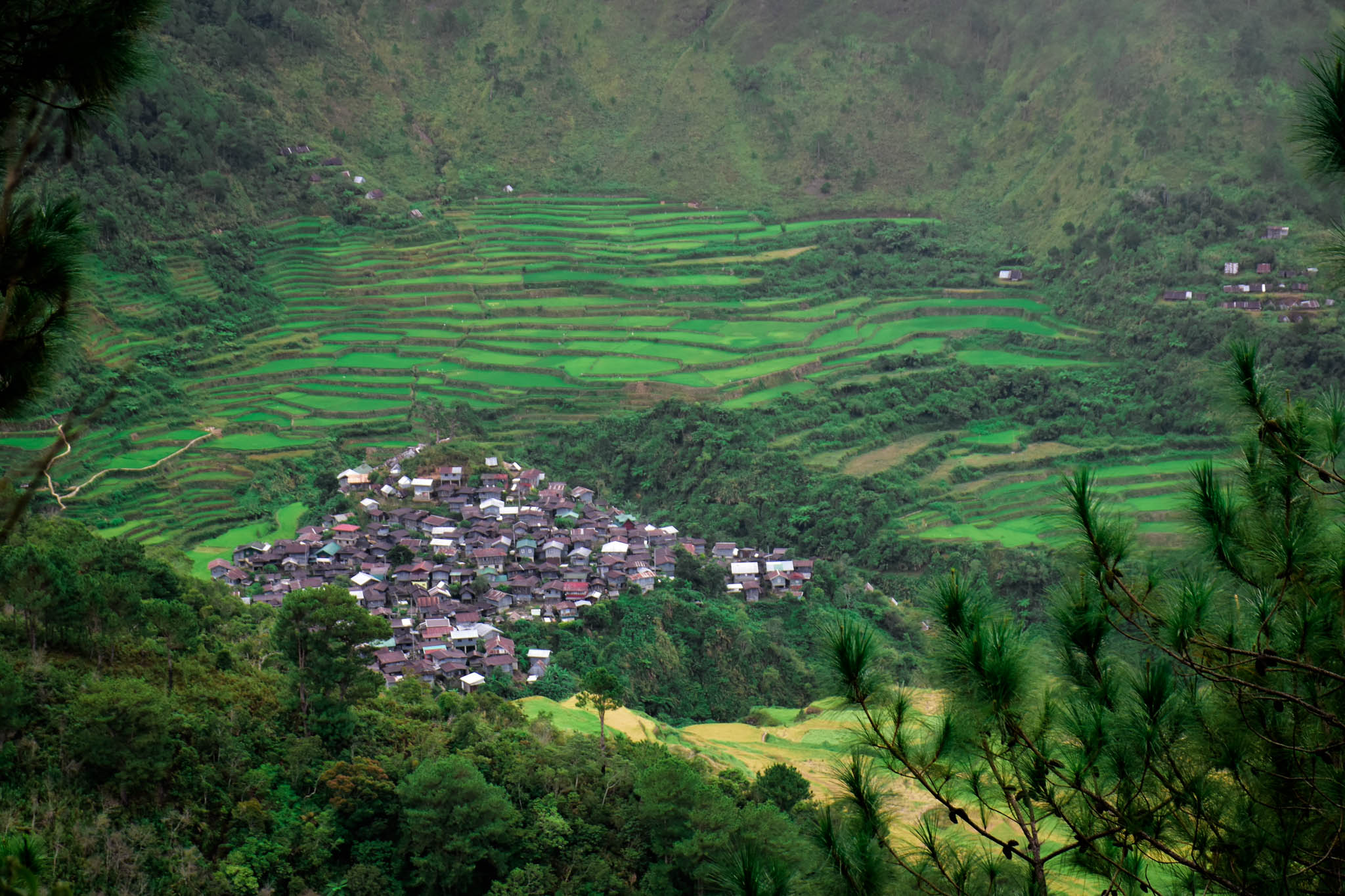 MALIGCONG RICE TERRACES 1 (1 of 1) - Copy