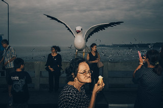 A giant seagull | by Mr.Lightman1975