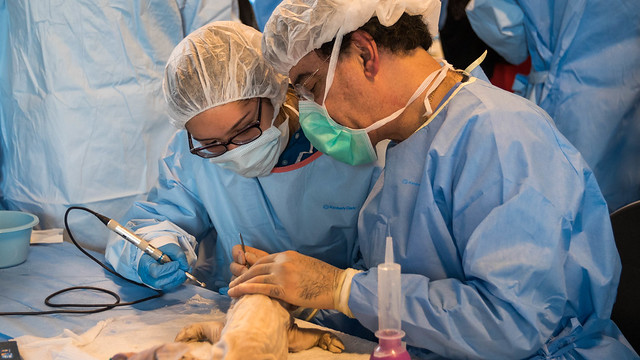 A Day in the Operating Room_2