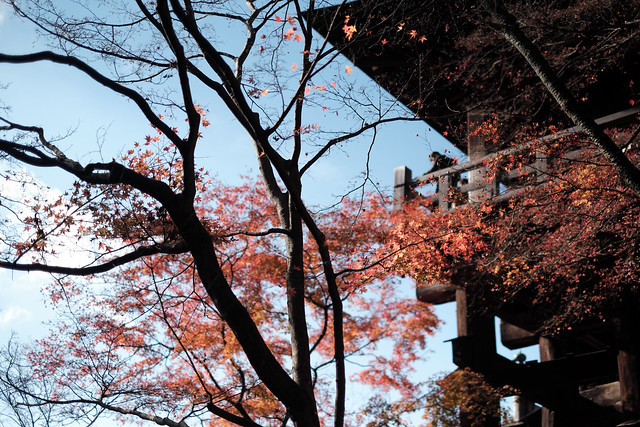 Autumn at the trace@Kiyomizu, Kyoto