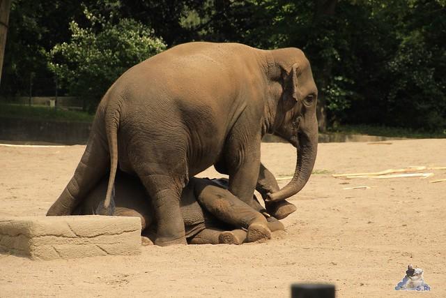Tierpark Hagenbeck 04.07.2015  101