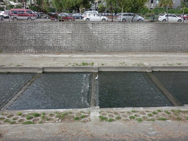 清澈的柳川有水鳥駐足