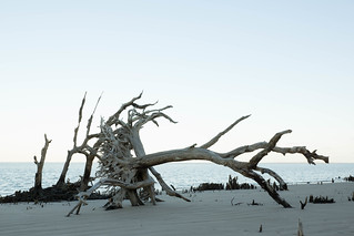 Driftwood | by +Lonnie & Lou+