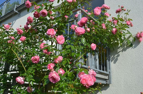 Mein Junigarten 2015