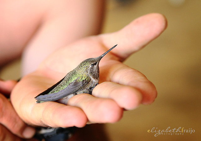 Hummingbird03W