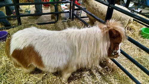 What I saw at today's World of Pets Expo at the Maryland State Fairgrounds in Timonium.