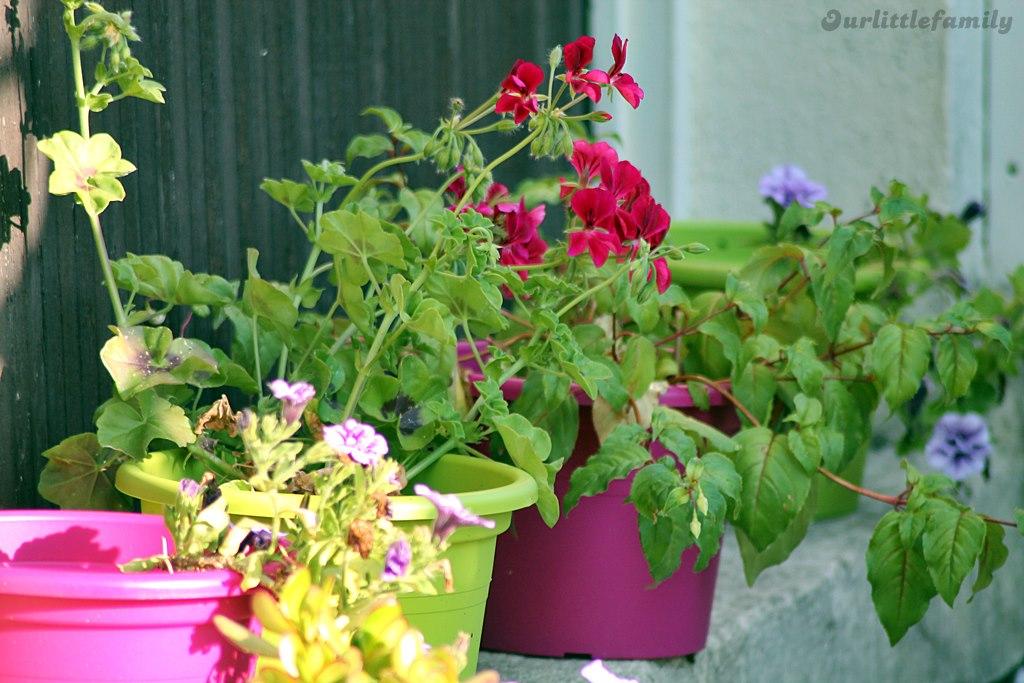 mon jardin 24