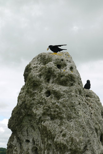 Stone & crows
