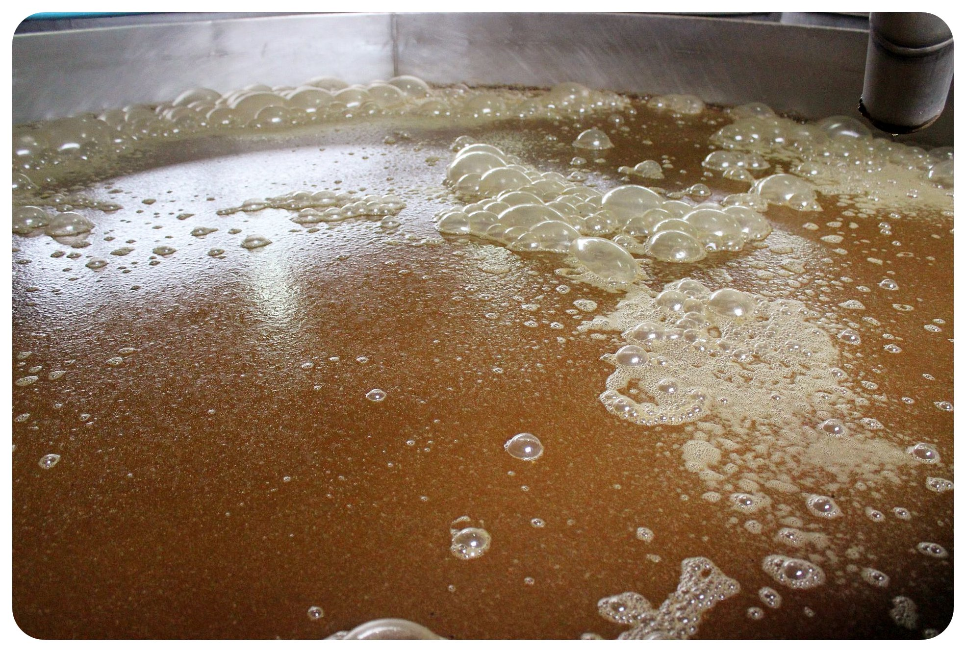 tequila orendain fermentation